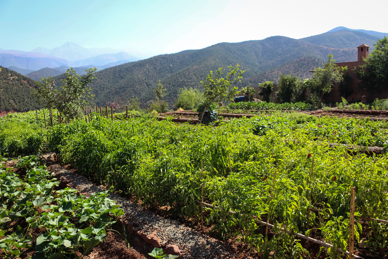 Vegetable and Herb Garden at Kasbah Bab Ourika, Morocco | Maroc | Luxury Travel |Atlas Mountains | Ourika Valley