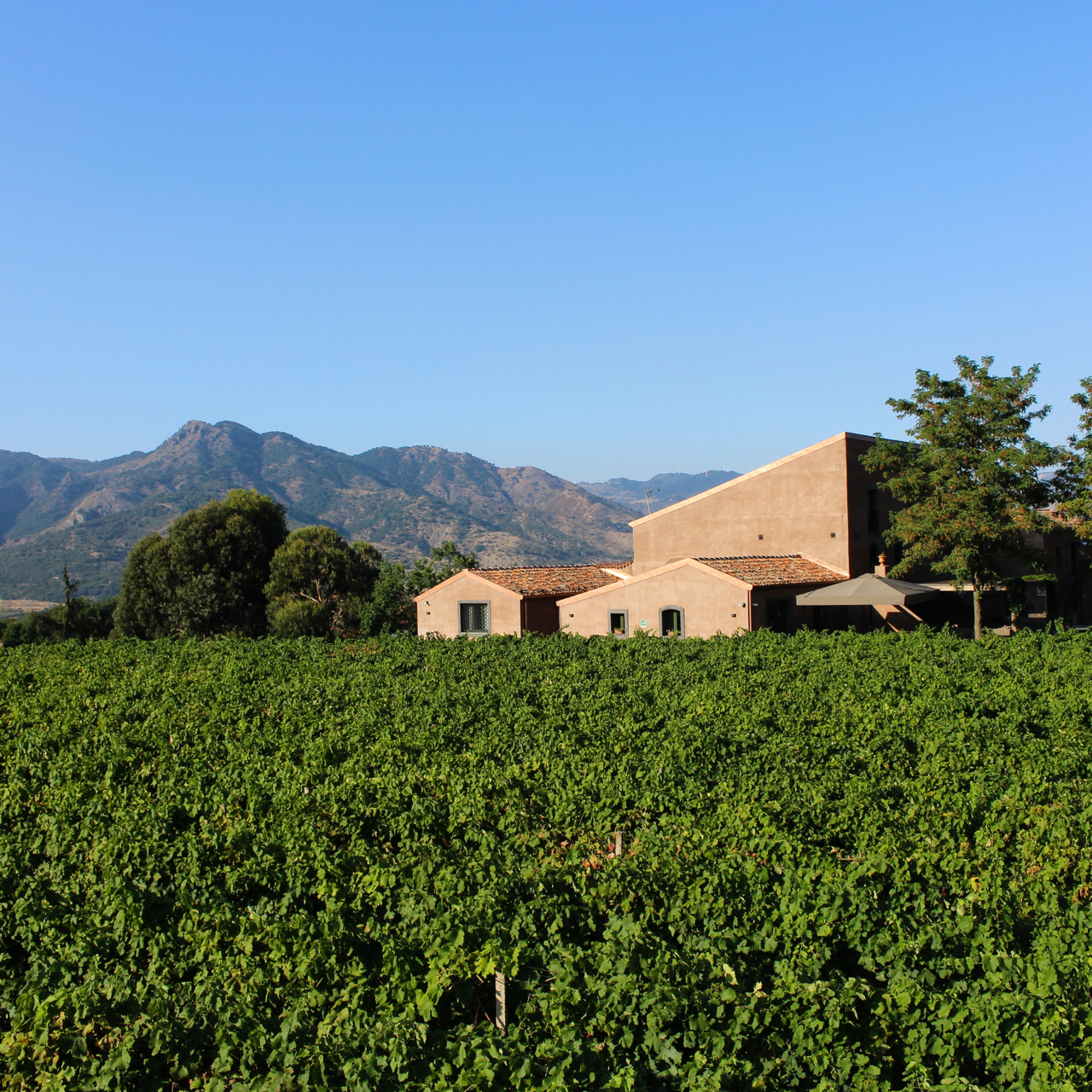 Firriato Winery, Sicily